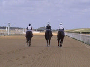 Thoroughbred track in flordia